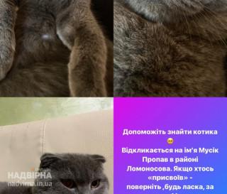 Пропав котик.Прошу повернути за винагороду. 0686485733 Наталія