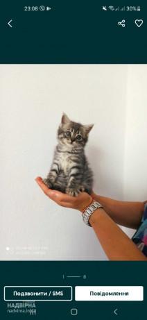 Віддам у хороші руки кошенят.